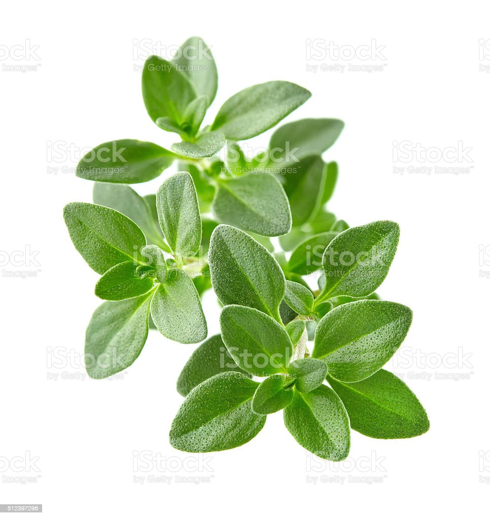 Thyme spices stock photo