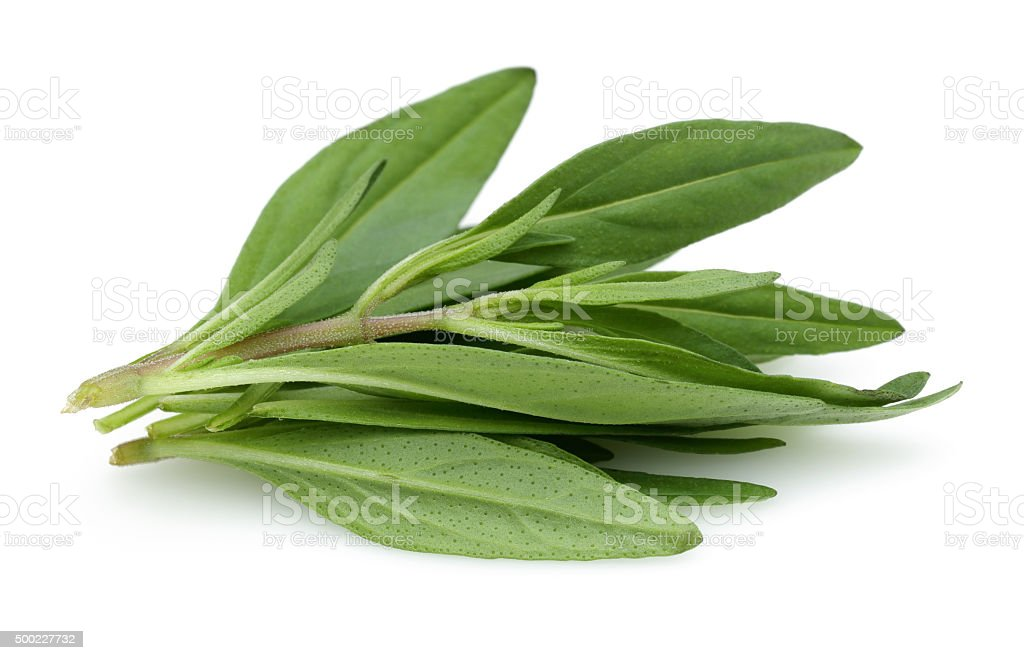 Thyme Twigs, Herb stock photo