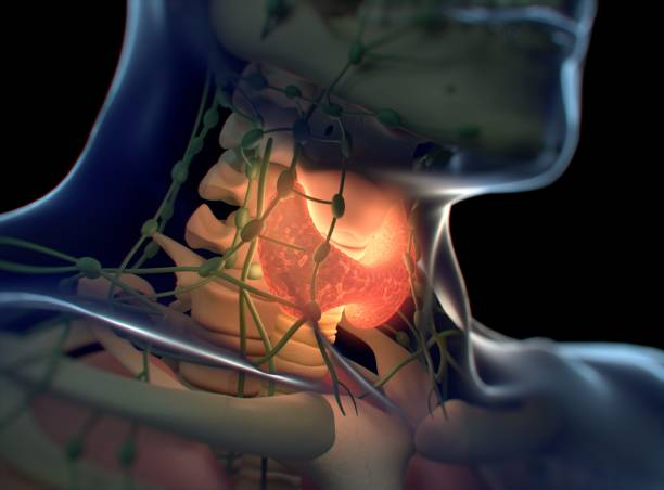 Thyroid gland inside human body. Glowing red. 3D illustration. Thyroid gland inside human body. Glowing red. 3D illustration.Thyroid gland inside human body. Glowing red. 3D illustration. endocrine system stock pictures, royalty-free photos & images
