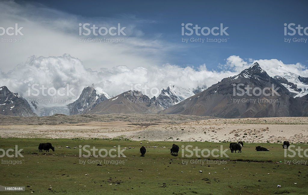 Tibet landscape royalty-free stock photo