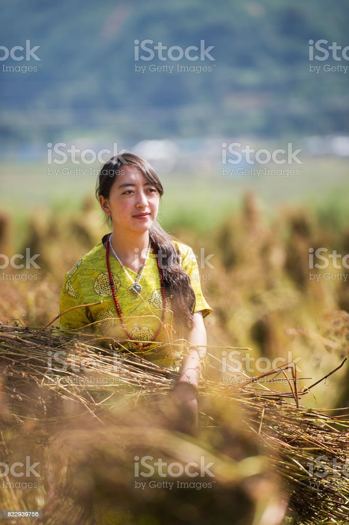 Tibet woman working in the field stock photo
