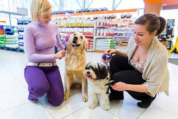 Terrier du Tibet et Golden Retriever dans magasin pour animaux de compagnie avec les propriétaires - Photo