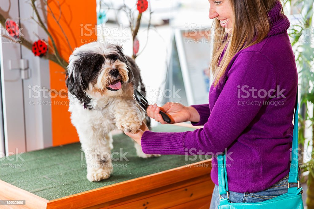 Tibetan Terrier in pet store...cute woman owner is brushing him