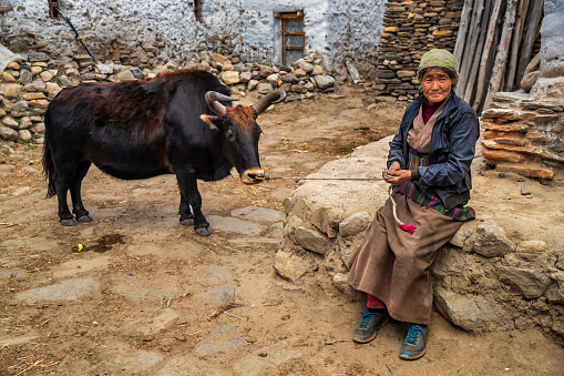 Tibetan woman leads yak in small village in Upper Mustang. Mustang region is the former Kingdom of Lo and now part of Nepal,  in the north-central part of that country, bordering the People's Republic of China on the Tibetan plateau between the Nepalese provinces of Dolpo and Manang.
