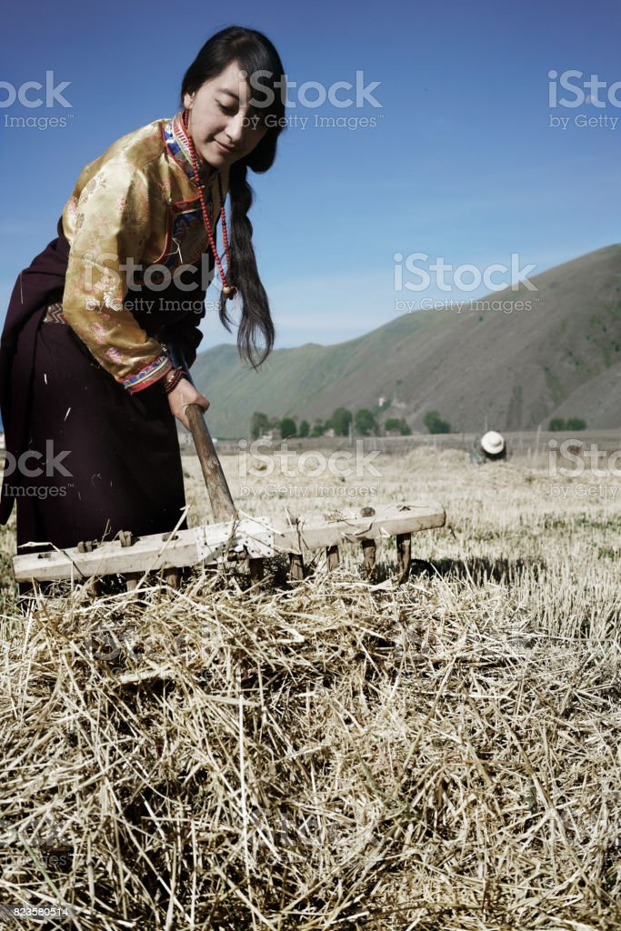 Tibetan young woman working in the field stock photo