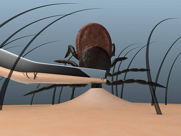 tick ablation stock photo