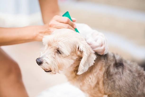 häkchen und flea-prävention für hunde - zeckenmittel stock-fotos und bilder