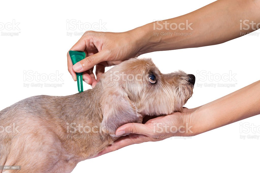 tick and flea prevention for a dog stock photo