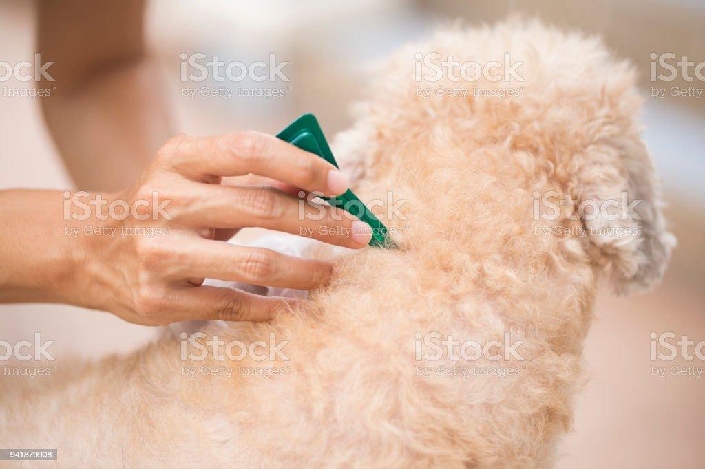 Häkchen und flea-Prävention für Hunde – Foto