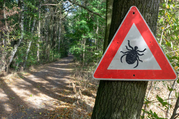 tick insect warning sign in forest stock photo
