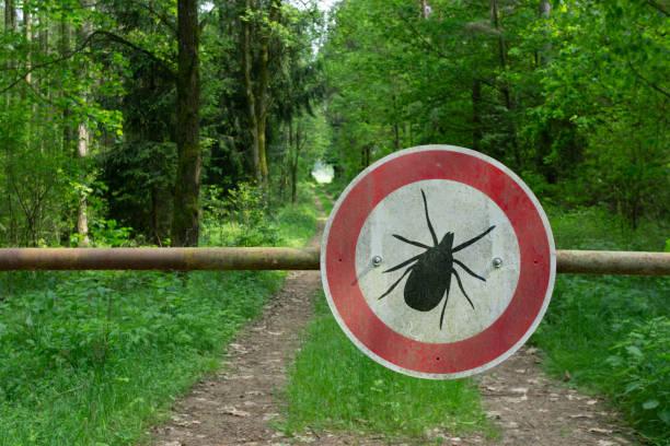 tick insekt warnzeichen im wald - zeckenmittel stock-fotos und bilder