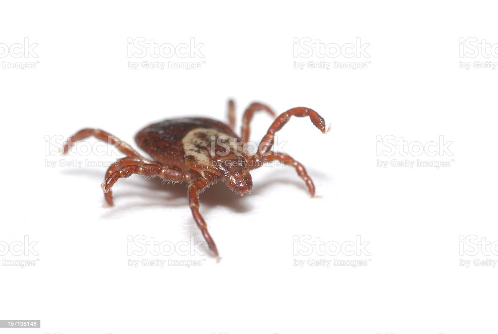Tick on White stock photo