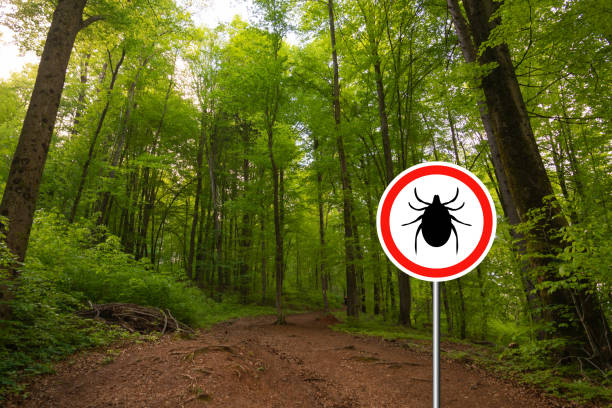 Tick sign in a green forest stock photo