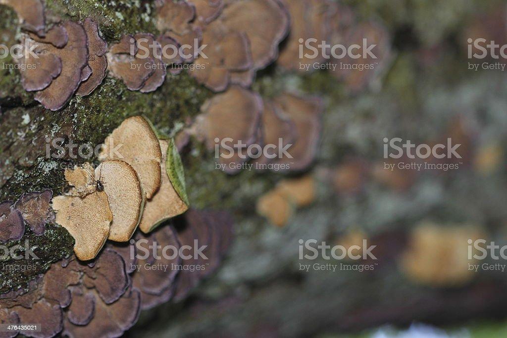 Tick under lichen royalty-free stock photo