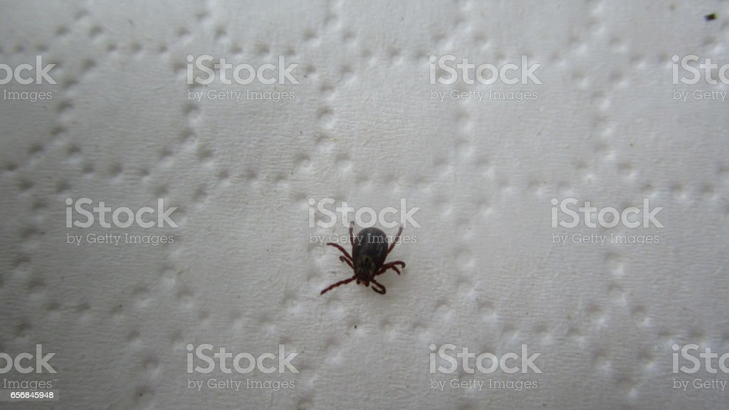 Tick-borne Encephalitis stock photo