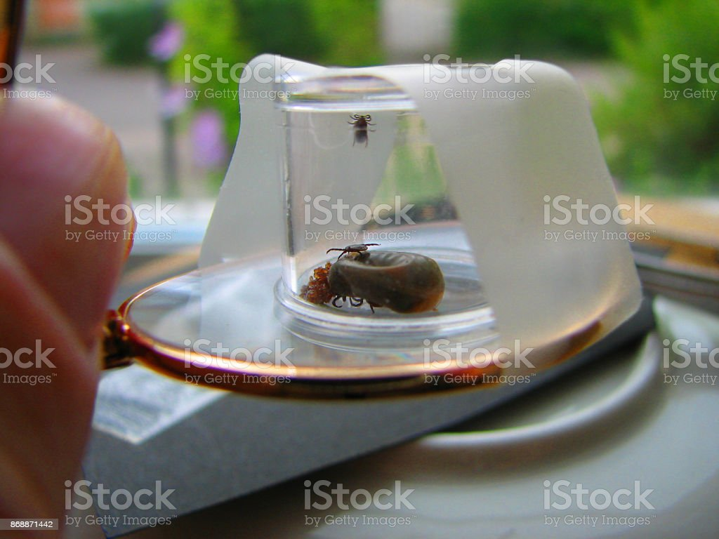 Ticks stock photo