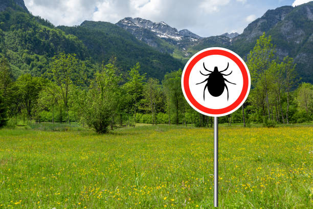 Ticks sign in the wild green meadow. stock photo