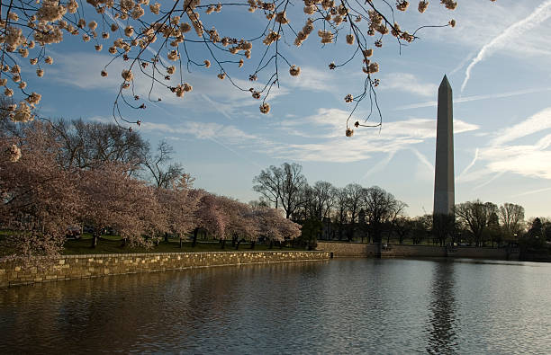 Tidal Basin and Washington Monument stock photo
