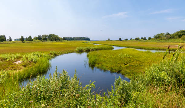 Tidal creek flowing through a salt marsh stock photo