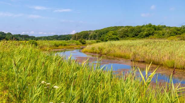 Tidal creek in a marsh stock photo