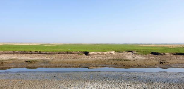 Tidal low water level in salt marsh creek stock photo