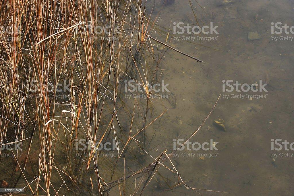 Tidal Marsh at Waters Edge royalty-free stock photo