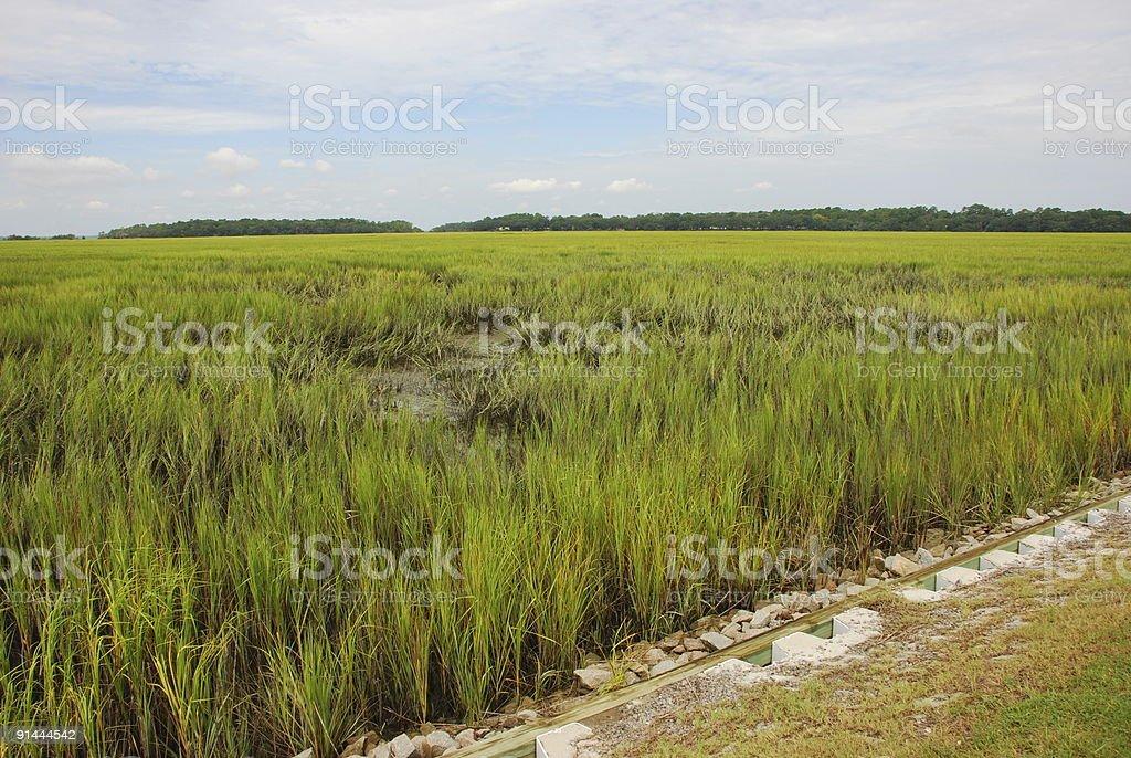 Tidal Marsh Wetlands stock photo