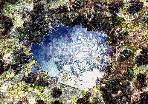 istock Tidal pool teeming with miniature marine life 699856958