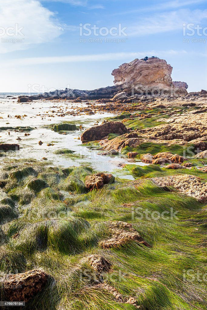 Tide Pools During Extreme Low Tide stock photo