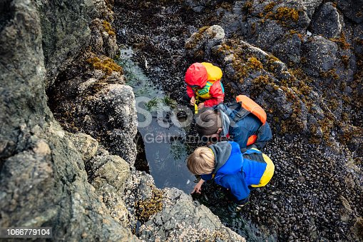 Family looking in tide pool.
