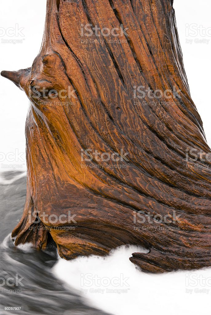 Tideswept Stump royalty-free stock photo