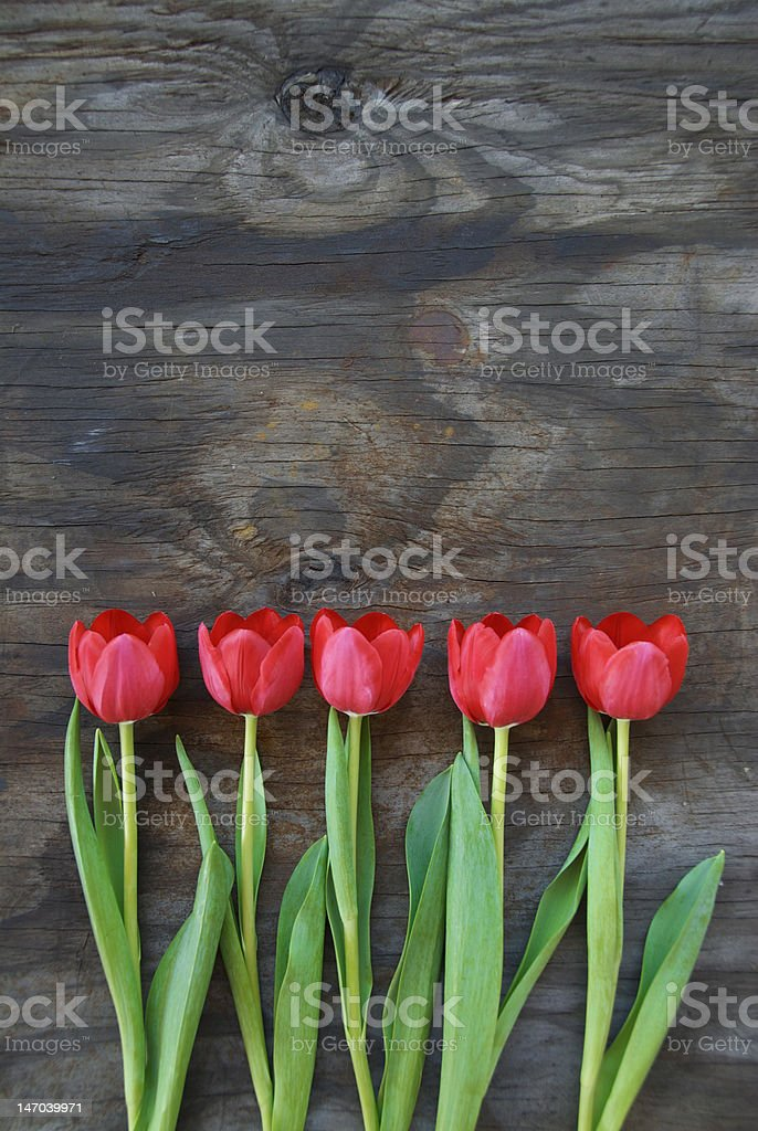 tidy tulips on an old wood background stock photo