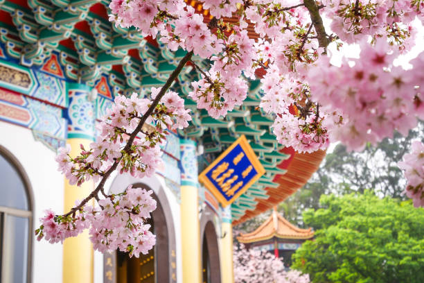 Tien Yuan Tempel mit der Kirschblüte in Tamsui, Taiwan. (Die englische Übersetzung des Textes ist