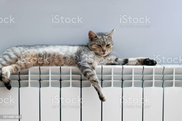Tiger cat relaxing on a warm radiator picture id1074597302?b=1&k=6&m=1074597302&s=612x612&h=ygfqumlc01va4ywt w53 thfem6nk9so efdn8tiod0=