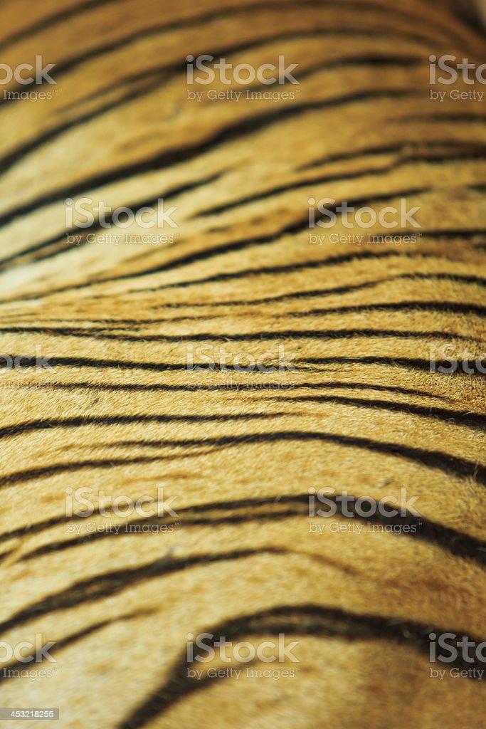 tiger fur and  skin stock photo