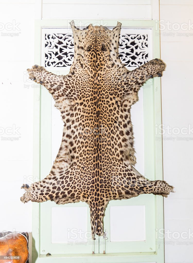 Tiger Fur hanging on wall stock photo