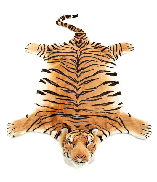 tiger fur #2 - tiger fur stock photos and pictures