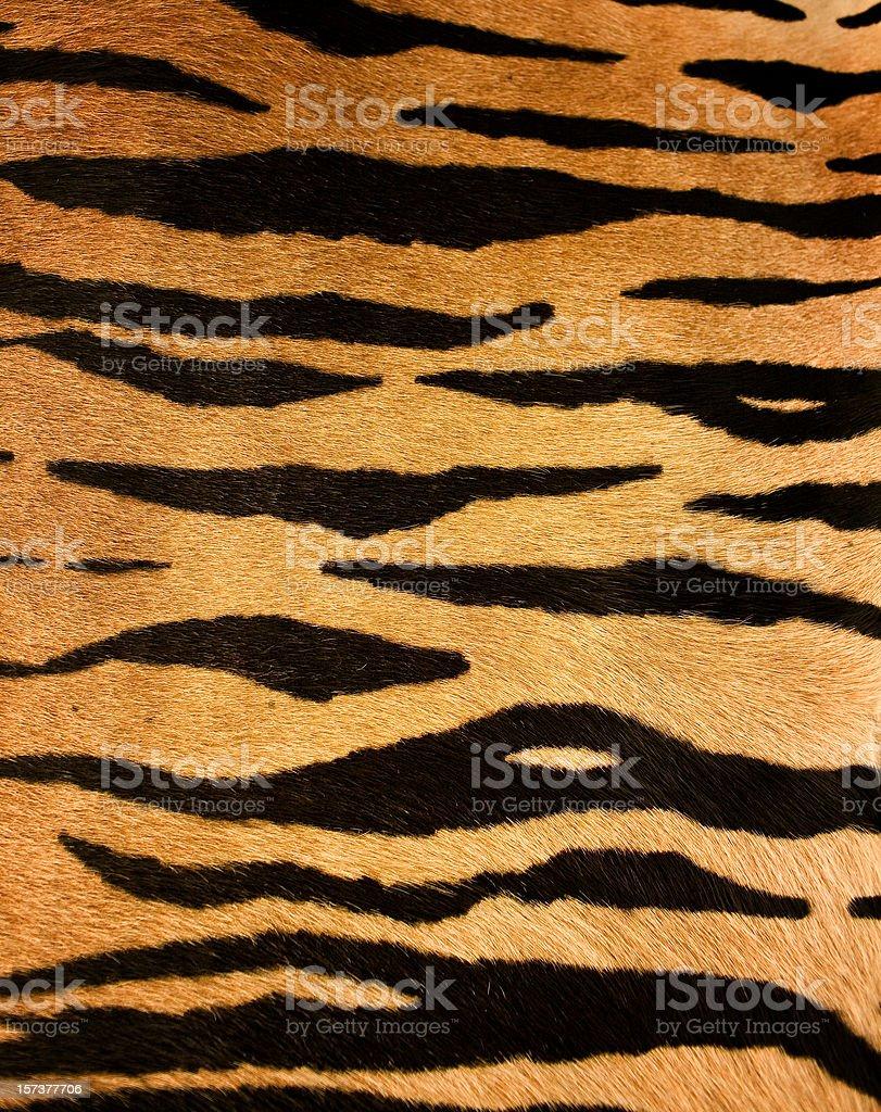 tiger fur royalty-free stock photo