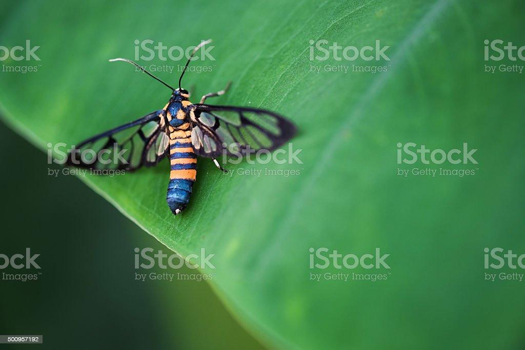Fotografía de Mariposa Tigre Hierba Barrenador En Una Hoja y más ...
