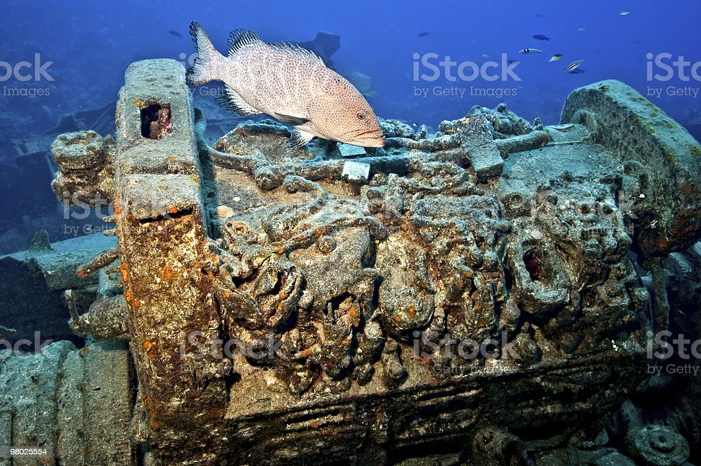 Tiger grouper and wreckage royalty-free stock photo