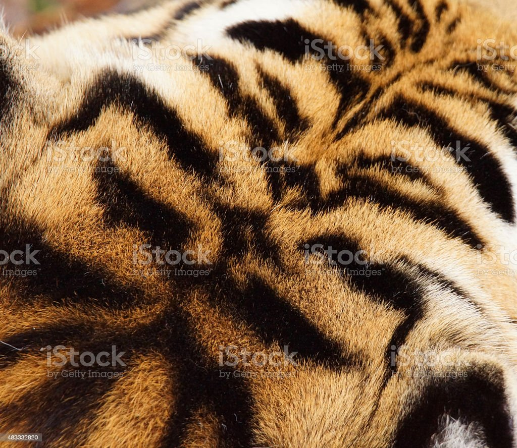 Tiger head fur pattern stock photo