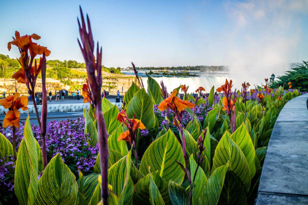 Tiger Lilies in Niagara Fall at Canada, Ontario stock photo