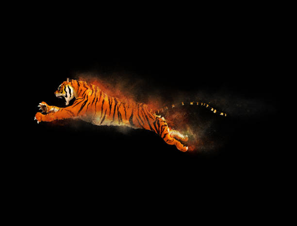 Tiger moving and jumping with dust particle picture id886026882?b=1&k=6&m=886026882&s=612x612&w=0&h=64iobcp5ay hsrfqsg8zu uvir5cvhcgxry2d08oixq=