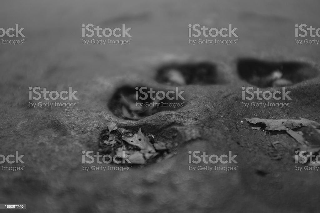 Tiger Pawprint in Mud stock photo