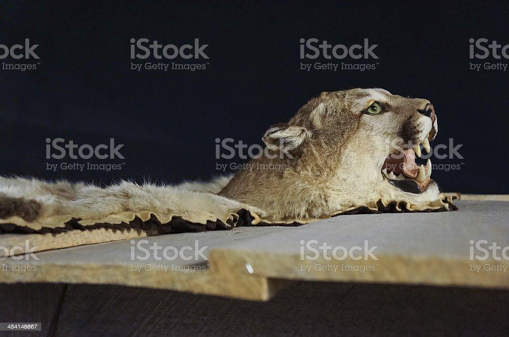 tiger royalty-free stock photo
