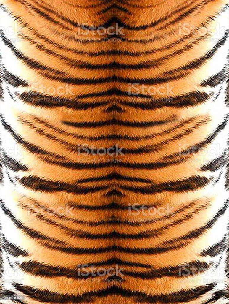 Tiger stock photo