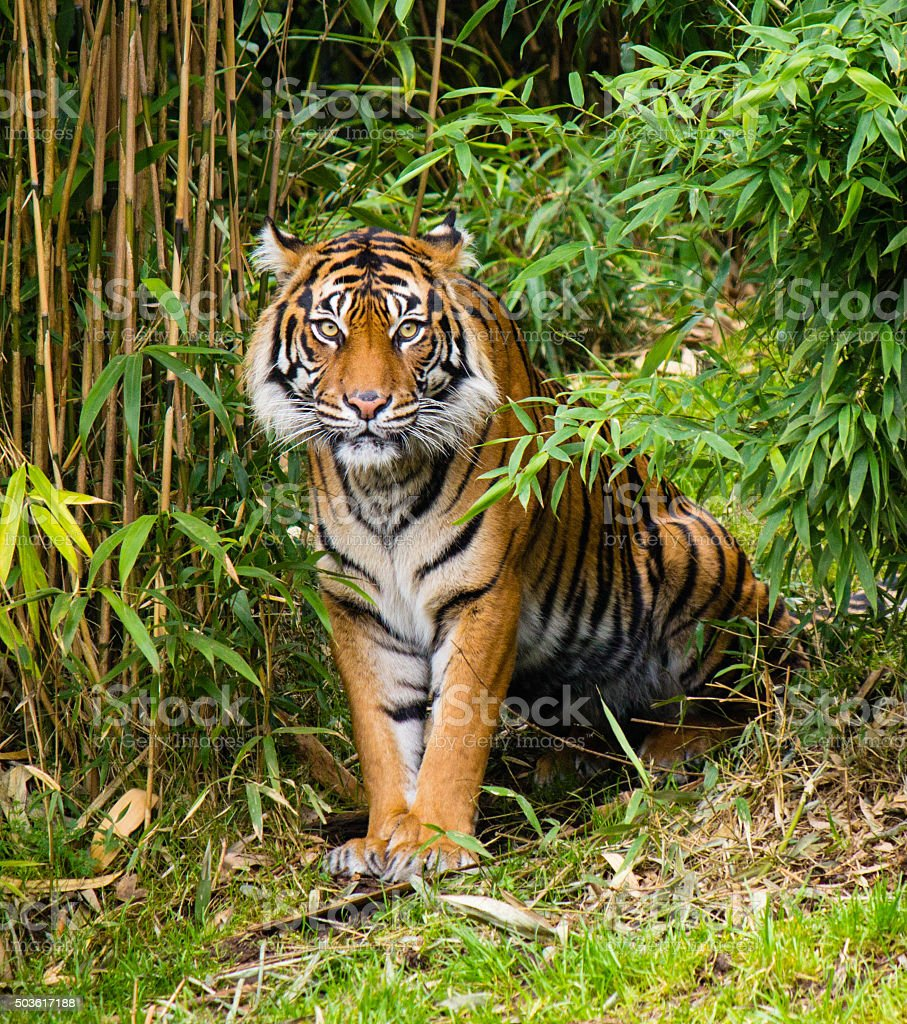 17 facts about tigers for International Tiger Day | Blog