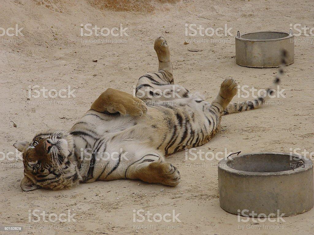 Fotografia De Tiger Juegos Para Ninos En La Espalda Y Mas Banco De