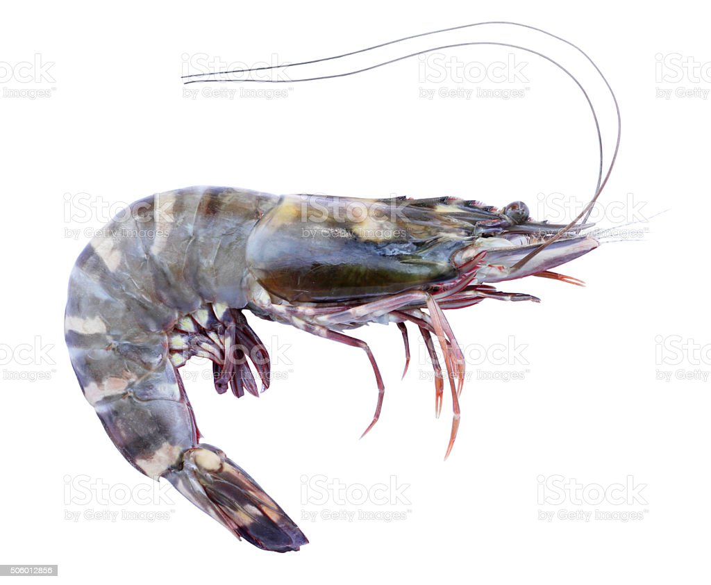 Tiger prawn isolated on white stock photo