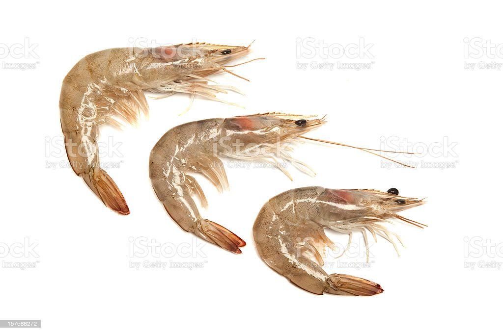 Tiger Prawns stock photo